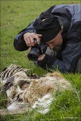 In de Oostvaardersplassen (Rene kooijman photografie) Tags: horse holland nature natuur deer flevoland equine lelystad almere paarden oostvaardersplassen herten wildernis rubensmit renekooijman denieuwewildernis thenewwilderness