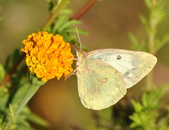 (`Jenn`) Tags: flowers butterflies