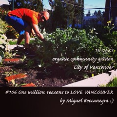 | no.106 | | 16 OAKS organic community garden | (onemillionreasonstolovevancouver) Tags: world city people tourism home promotion vancouver cool realestate profile today communitygarden l4l vancity downtownvancouver metrovancouver onemillion cityofvancouver vancouverite vancouvercity vancouvertourism vancouverrealestate vanone awesomevancouver instaphoto instagood instafollow uploaded:by=flickrmobile flickriosapp:filter=nofilter miguelboccanegra thegreatervancouverarea