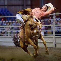 Hangin' on! (rexboggs5) Tags: hotel great riding western queensland rodeo bronco rockhampton flickrchallengegroup flickrchallengewinner thepinnaclehof compstp11130215 tphofmarch2015