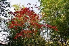 Ginkakuji (JuhaOnTheRoad) Tags: autumn japan temple kyoto asia buddhism bamboo ginkakuji