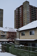 Winter in the Neighborhood (Vegan Butterfly) Tags: city winter urban snow buildings edmonton snowing