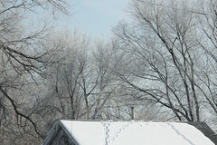 (provincijalka) Tags: blue trees roof chimney cold frozen december many branches tracks lookingup messy gathering snowcovered frosted intricate filigree waitingforspring provincijalka aroundwarmth
