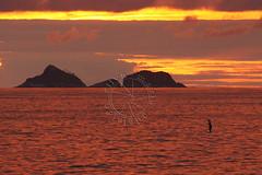 Stand up paddle (adelaidephotos) Tags: sunset sea summer brazil praia beach rio brasil riodejaneiro islands mar dusk pôrdosol verão sup paddlesurf arpoador entardecer ilhas standuppaddle mariaadelaidesilva