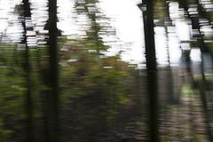 Pennellate fotografiche 3 (drainuzzo) Tags: autumn light art fall colors leaves foglie grove magic swirl autunno colori luce bosco brushstroke vortici pennellata magicalgrove