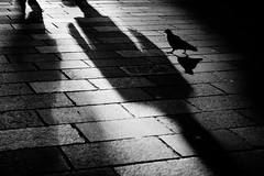 Living In The Shadows (Leanne Boulton) Tags: life lighting street city light shadow wild people urban blackandwhite bw sun sunlight white abstract black bird texture nature monochrome lines silhouette composition contrast canon dark point landscape mono scotland living blackwhite high cityscape shadows view natural pov pavement glasgow pigeon wildlife low bricks perspective scenic pedestrian scene sidewalk human level shade area paving bandw cobbles footpath zone avian feral fragment elongated