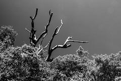 IMG_2608 (Photo.Enthusiast_1968) Tags: manly sydney australia sydneyharbour northhead quarantinestation