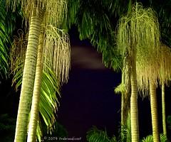 Balmy nights in Brisbane (trebandicoot (Lynn)) Tags: tree night lights australia brisbane palm queensland alexander abigfave blinkagain