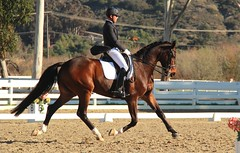 Del Mar Dressage show ~Stephen Peters (ServaneO) Tags: horse cheval grand stephen prix peters dressage