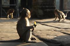 Siem Reap (Ana Claudia Lubitz) Tags: nature monkey cambodia ankor siemreap angkor indochina angkorcomplex ankorcomplex {vision}:{outdoor}=084 {vision}:{sky}=0729