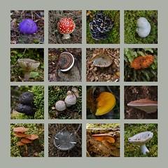 Catlins River Walk, Catlins, NZ (flyingkiwigirl) Tags: river walk fungi otago ferns catlins beech swingbridge tramp