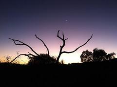 River Bottom Silhouette (Nathan Wickstrum) Tags: trees dogs nature swimming landscape photography oak wildlife lakes holes climbing camel rainbows ojai susnet la2ojai nathanwickstrum