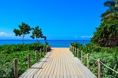 Walkway (Jason Fairbairn Photography) Tags: ocean travel trees sea usa sun tree green beach sunshine walking hawaii sand nikon waves bright wave maui walkway colourful kaanapali kaanapalibeach nikonphotography d5100