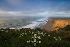 California Dreaming (markvcr) Tags: ocean california flowers sea seascape beach nature landscape coast surf scenic pointreyes drake