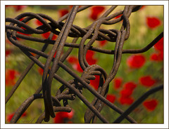 Rust  and Red. (Dora-A) Tags: flowers red abstract color wire rust iron doraa