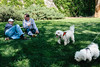 Two Cute Dogs (boingyman.) Tags: street dogs davis boingyman