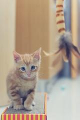 Brian (Papagueno) Tags: animals cat brian 50mmf18 nikond7100
