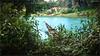DSC_1471 (|| Nellickal Palliyodam ||) Tags: race temple boat snake kerala lord pooja krishna aranmula parthasarathy vallamkali parthan othera palliyodam koipuram poovathur nellickal kuriyannoor