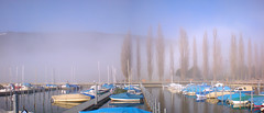 Foggy Harbor (David K. Marti) Tags: harbor boats trees landscape hill sky fog foggy outdoor outdoors country nature natural pier weather scenic widescreen panorama color colorful blue yellow lake water reflections poles me2youphotographylevel1 me2youphotographylevel2 me2youphotographylevel3 me2youphotographylevel4 growth growing colored colour colourful yellows blues wet scenery tree plant urban city cloud scene nikon coolpix s210