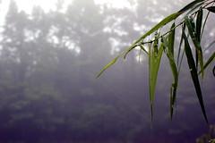 see me (Megan Alais) Tags: morning summer macro grass fog photography spider pond web hue canont2i meganbartlett