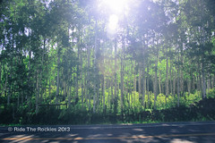 Sun coming up through Aspens en route to Lizard Head Pass. (RideTheRockies) Tags: day1 telluride cortex featured rtr2013
