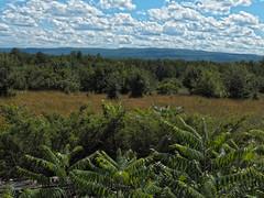 On Constant Lake Rd looking South to the Madawaska Highlands (cjh44) Tags: road trees highlands orchard madawaska constantlake