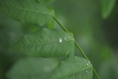 Un verano esta terminando (@JullisayBueno) Tags: summer flower green hoja rain happy photography lluvia italian flickr foto fine verano end pioggia abruzzo bagnato 2013