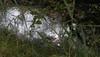Schwimmendes Fallobst, Äpfel in einem Wassergraben unter dem Apfelbaum; Norderstapel, Stapelholm (Chironius) Tags: norderstapel stapelholm schleswigholstein deutschland germany allemagne alemania germania германия szlezwigholsztyn niemcy frucht fruit frutta owoc fruta фрукты frukt meyve buah apfel rosids fabids rosales rosenartige rosaceae rosengewächse rosoideae pyreae kernobstgewächse pyrinae malus baum bäume tree trees arbre дерево árbol arbres деревья árboles albero árvore ağaç boom träd