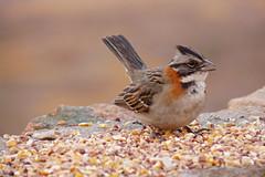 LA PRIMAVERA YA ESTA AQUI !!!! (su-sa-ni-ta) Tags: bird primavera argentina colors spring flickr colores lindo cordoba hoy today pajarito 29deseptiembre bentiempo