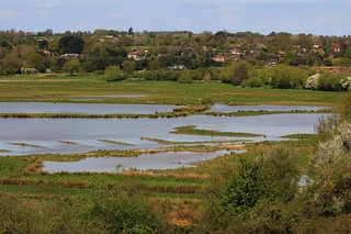 Pulborough Brooks RSPB West Sussex (5)
