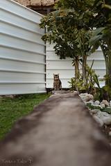a cat (Tania's Tales) Tags: street city cats animal cat fence mammal feline streetphotography stray   metalfence    fotografiastradale taniastales