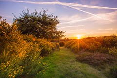 Sunset over Sutton (Vemsteroo) Tags: road park wood autumn trees tree fall nature leaves pin