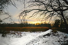 Dusk on the Marsh (floralgal) Tags: winter snow nature forest landscape woods ryenewyork newyorklandscape marshlandsconservancy ryenewyorklandscape winteratmarshlandsconservancy