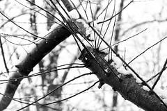 AO3-5638.jpg (Alejandro Ortiz III) Tags: newyorkcity usa snow newyork alex brooklyn digital canon eos newjersey unitedstatesofamerica snowfall canoneos allrightsreserved lightroom rahway alexortiz 60d lightroom3 shbnggrth alejandroortiziii ©2013alejandroortiziii