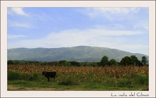 Flickriver Recent Photos From Las Matas De Farfan San Juan