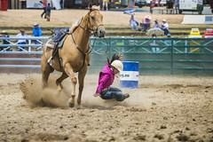14-02-08_Cooma_Rodeo_0412a (Fat Boy Foto) Tags: cowboy barrel and rodeo bullriding broncs roping wrestlingteam abcra undecoratingsteer coomarodeo clownbarrel racingbarebackcow girlbullcalfhorseclownrodeo tiesaddlebroncsteer racingrope