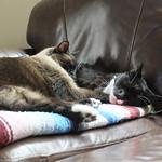 Bekah's Cats thumbnail