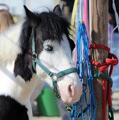 occhi azzurri (Riccardo Fabbri) Tags: occhi albino cavallo azzurri infinitexposure