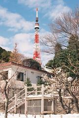 (Kkeina) Tags: park flowers snow film nature japan analog 35mm 50mm tokyo olympus manual om om1