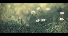 Marghe (Orione59) Tags: canon photography bokeh tuscany cinematic margherita ef85mmf12l 5dmk3 orionephotographer