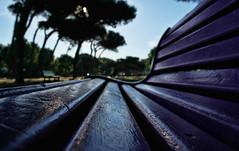 Seduto a guardare (Stefano085) Tags: parco tree alberi bench pov violet samsung panchina nx1000