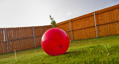 Texas Rain and the Red Ball (khybinette) Tags: red dog plant cute window wet rain ball happy furry funny warm texas sad lol humour redball haha storms granbury