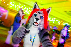 _MG_0714 (Tiger_Icecold) Tags: confuzzled cfz2016 cf2016 furcon furry convention fursuit birmingham party deaddog ddp deaddogparty
