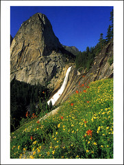 postcard - Yosemite, Nevada Fall & Liberty Cap (Jassy-50) Tags: postcard yosemitenationalpark yosemite nationalpark park unescoworldheritagesite unescoworldheritage unesco worldheritagesite worldheritage whs spring flowers mountain waterfall nevadafall libertycap wildflowers rock