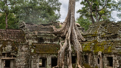 Temple of Doom (Ron Scubadiver's Wild Life) Tags: nikon cambodia angkor wat temple 24120 outdoor ruin architecture ancient tree