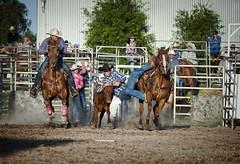 Steer Wrestling (Ineke Struk) Tags: rodeo steer cowboy wrestling horse country tough