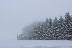 Fog in winter (pegase1972) Tags: qc québec quebec canada winter hiver neige snow monteregie montérégie tree arbre fog brouillard licensed shutter dreamstime explored 500px rf123