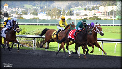 2017 El Camino Real Derby @ Golden Gate Fields (billypoonphotos) Tags: zakaroff california el camino real derby 2017 golden gate fields mario gutierrez jockey kyle frey ann arbor eddie bay area synthetic track tapeta photo picture photographer photography horse racing billypoon billypoonphotos nikon 55200mm 55200 mm nikkor lens thoroughbred news horses riding albany race san francisco stretch kentucky d5500