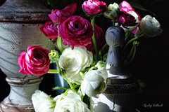 Afternoon Light (Jewel Appletor aka Karalyn Hubbard) Tags: flowers photo photography staging spring finial ranunculus filteredlight garden cutflowers mothernaturesbeauty