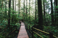 Boardwalk (eric.vanryswyk) Tags: rainforest boardwalk forest green tree trees cedars wood ferns water rain north vancouver british columbia canada nikon d610 nikkor 20mm f18 landscape serene colour contrast fuji vsco